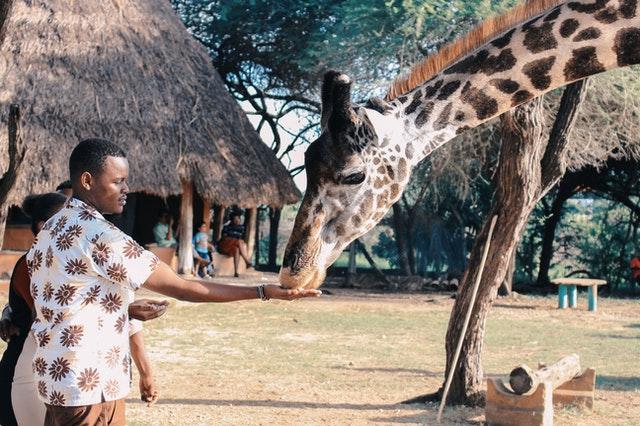 accessoires indispensables safari